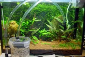 What Type Of Aquarium Filter Is Necessary For Your Fish?