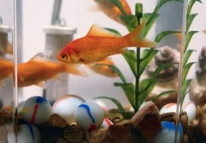 How To Maintain Aquarium For Your Aquarium Fish?