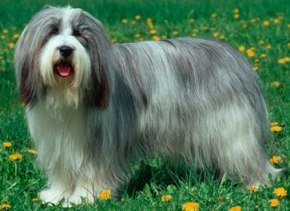 Dog Breed Info To Select The Right Dog Breed For Your Family!