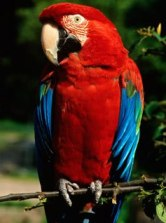 Exotic Birds Are Excellent Pets With Beautiful Look!