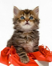 The General Behavior Of All The Cutest Cats From The Stage Of Kittens!