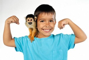 Is It An Easy Task To Take Care Of Pet Monkeys?