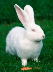 Tips To Take Care Of Your Pet Rabbit!
