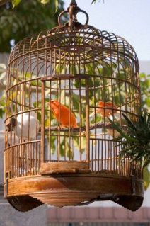 Do You Love Birds? Know How To Set Up A Bird Cage At Your Home!