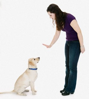 Dog Training Tips To Make Your Dog Know What Is Right And What Is Wrong!