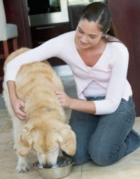 Pet Medications To Cure If Your Pet Is Unhealthy!