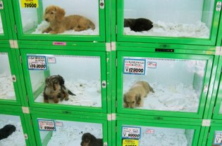 Find Out The Features That You Should Look For In The Pet Store!
