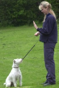 Pet Training Rules That Mould You As A Perfect Pet Trainer!
