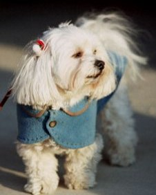 Why Pet Insurance Is Essential For Your Pet?