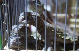 Building Your Own Reptile Cage Can Be A Rewarding And Fun Experience!