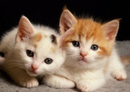 How To Take Care Of Your Kitten After Getting It Home?