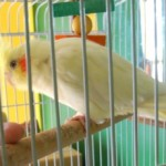 Importance Of Bird Cage Cleaning And Tips To Clean The Bird Cage!
