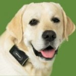 GPS Dog Tracking System To Help You In Locating Your Lost Dog!
