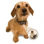 21 Century Pet Collar For Enhancing Safety Of The Pet!