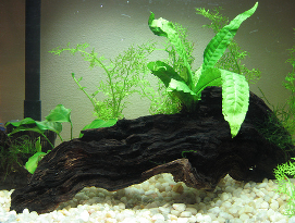 aquarium plant maintenance