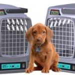Climate Control Carriers To Maintain Ideal Temperature For Your Pet!