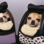 Trendy, Cool, Sophisticated Accessories For Your Dog!