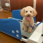 doggy treadmill