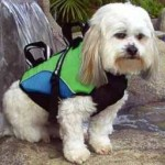 Dog Jacket To Ensure Your Dog Safety When It Goes Overboard!