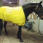 Thermotex Equine Infrared 12-Element Blanket To Solve The Muscle And Joint Problems Of Your Pet!