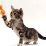Simple Tips To Train Your Kitten!