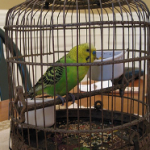 How To Take Care Of Your Pet Bird While Traveling?