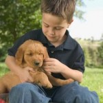 How To Select The Dog That Is Adaptable To Children?