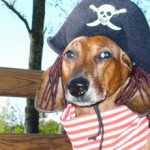 25 Unique And Fun Halloween Costumes For Your Canine