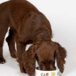 How To Choose Allergy Free Dog Food For Your Pet?