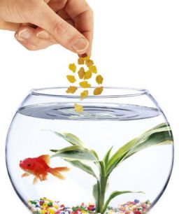 Best foods for your tropical fish the pets central for Best fish food