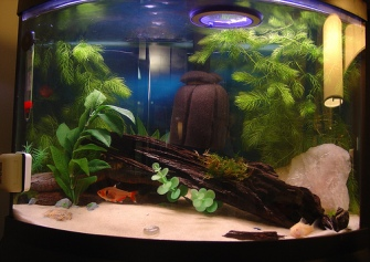 Use your creativity to decorate your fish tank the pets for How to decorate fish tank
