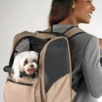 How To Transport Pets When Traveling?