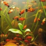 Tips To Control Algae In Freshwater Aquarium