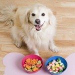 Ingredients To Avoid In Your Pet Food