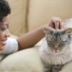 Massage Therapy For Pets