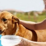 Stop Your Pet Suffering From Dehydration
