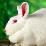 Tips For Rabbit Owners