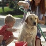 Essential Measures To Treat Hotspots In Dogs