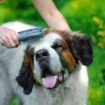Substitutes For Dog Shampoo To Avoid Dirty Smell From Your Pet