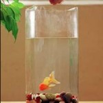 Helpful Tips For Feeding Aquarium Fish