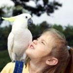 6 Tips To Keep Pet Birds Healthy