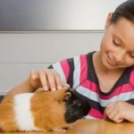 5 Basic Steps For Keeping Guinea Pigs Happy And Healthy