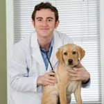 How To Keep Your Pet Healthy In Tough Economic Times?