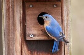 bluebird house