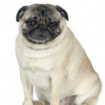 Signs Of Osteoarthritis In Pets