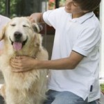 4 Easy And Quick Ways To Groom Your Dog Properly