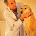 Dental Problems In Pets Cannot Be Ignored