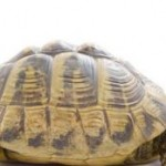Humane Society Warns Against Keeping Turtles As Pets