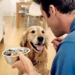 Be Careful Giving Dogs &#8220;Human&#8221; Food