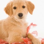 4 Most Adorable And Affectionate Dog Breeds